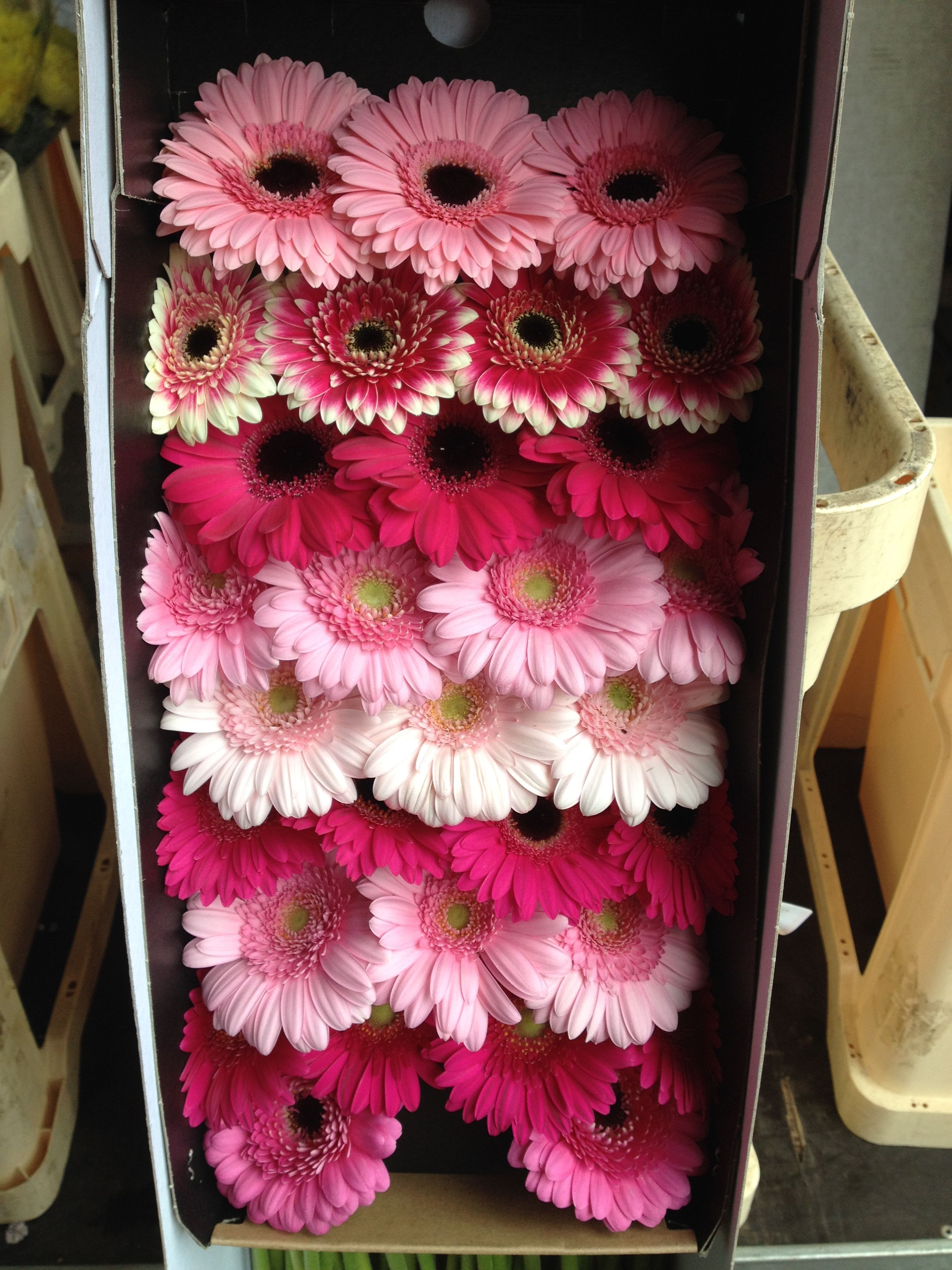 Wholesale Fresh Flowers for DIY weddings and events | Diy ...