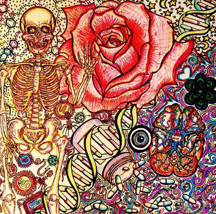 Down the Step 1 Rabbit Hole | anatomy artwork | Anatomy