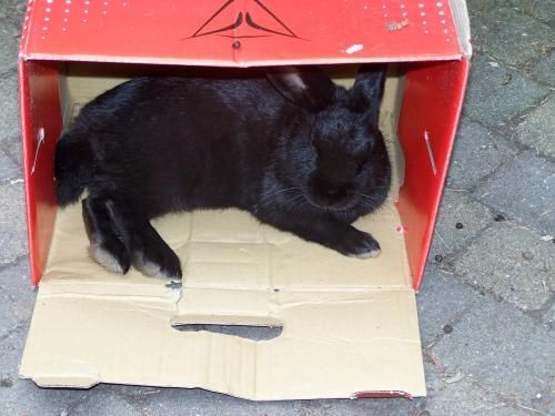 Bunny Barry in a box