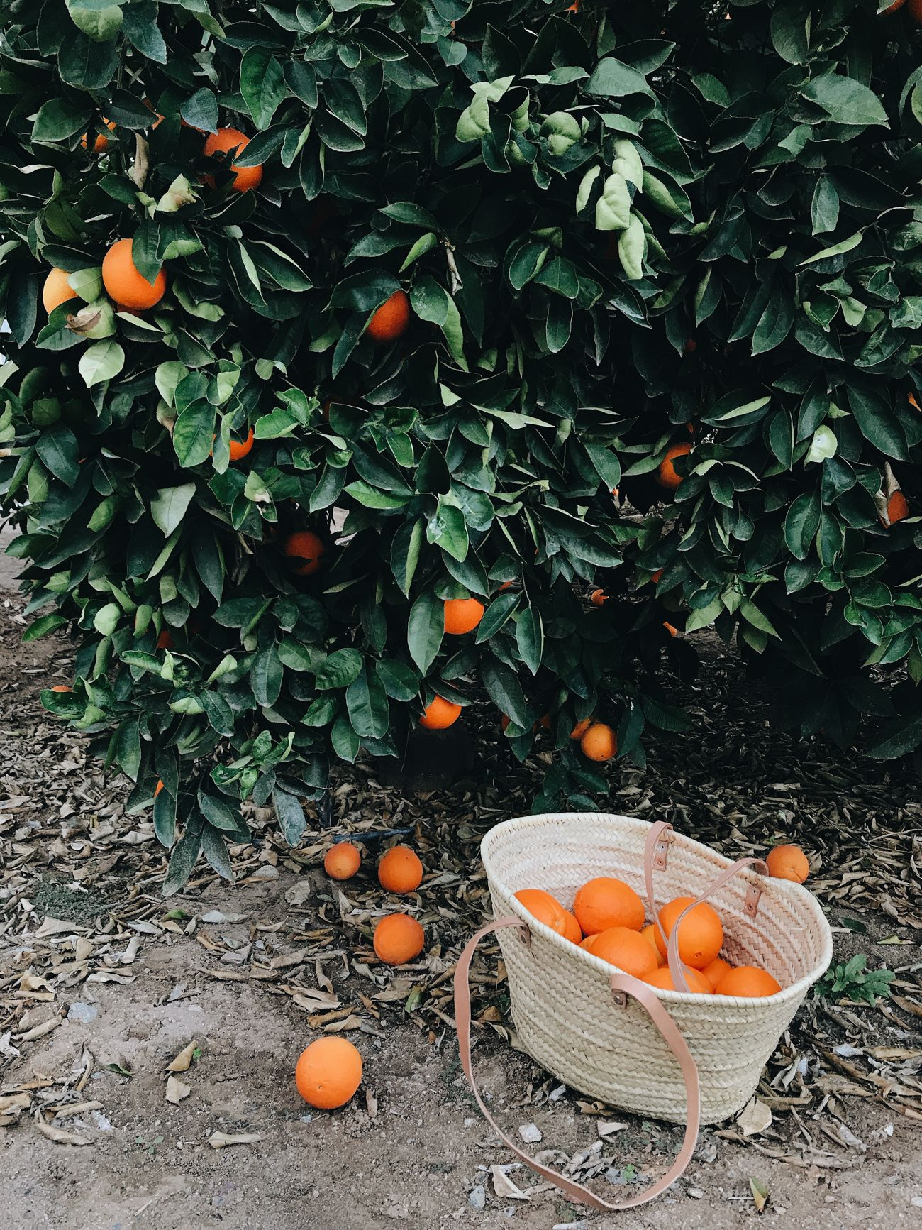 Citrus Season at Grove House + Giveaway — HEATHER BULLARD