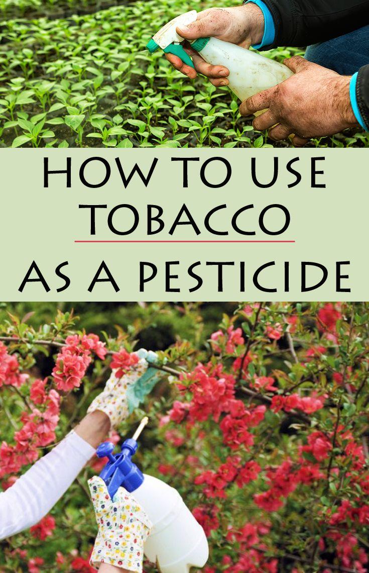 How To Use Tobacco As A Pesticide Natural Pesticides Pesticide Green Pest Control