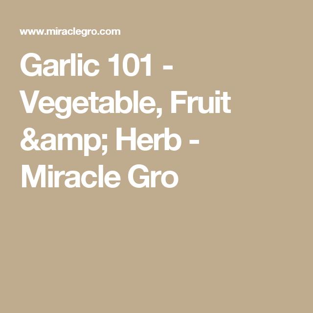 Garlic 101 - Vegetable, Fruit & Herb - Miracle Gro | Cooking