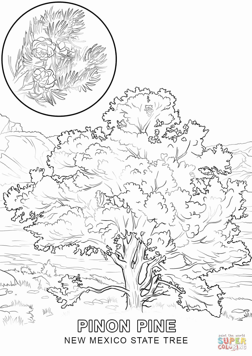 Christmas In Mexico Coloring Pages Unique New Mexico Tree Coloring Page Coloring Home In 2020 Flower Coloring Pages Flag Coloring Pages Tree Coloring Page