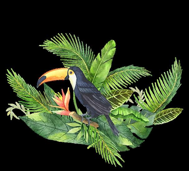 Toucan Free Png Images Free Digital Image Download Transparent Background Upcrafts Design Bird Poster Paint Vector Big Bird