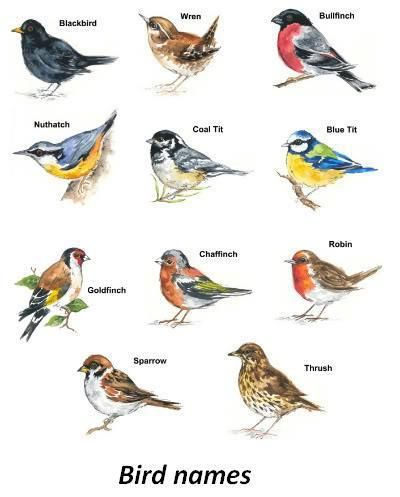Blue Bird Names >> Details About Bird Select Type Size Waterslide Ceramic Decals Bx