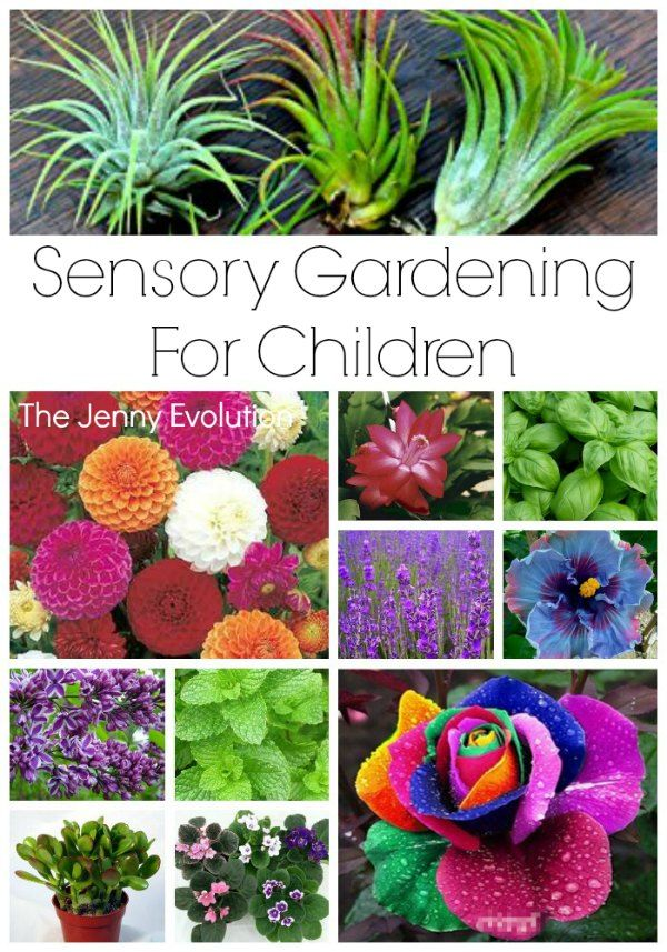 garden sensory garden ideas for children