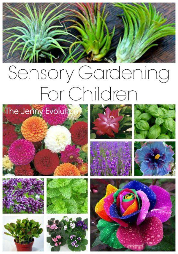 Sensory Garden Ideas For Children Sensory Play Sensory Garden