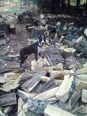 lost dog reward!!!!!! | Losing a dog, Pitbull mix, Dogs