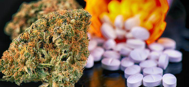 Cannabis beter dan reguliere medicijnen tegen deze vijf ziektes - Mediwietsite
