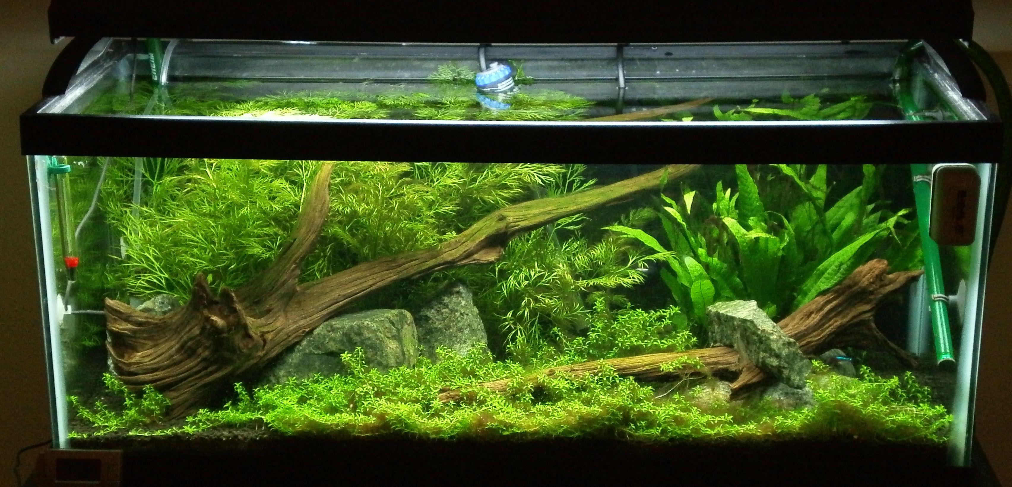 Gorgeous 20g long planted tank aquarium pinterest for Planted fish tank