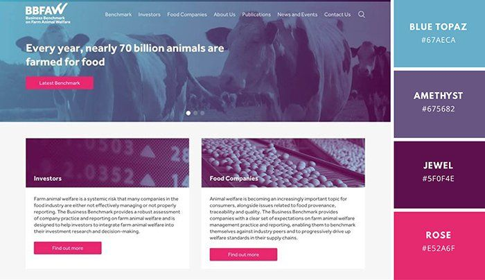 Best Website Color Scheme Examples Canva Learn Website Color Schemes Website Color Palette Color Schemes