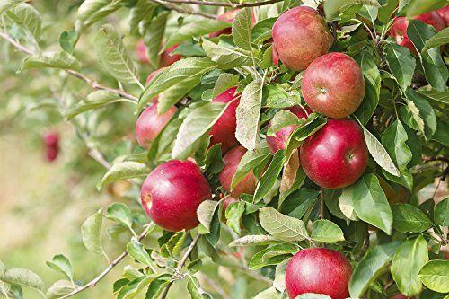 Top 5 Fruit Trees Fruit Tree Garden Fruit Trees Uk Tree Garden Design