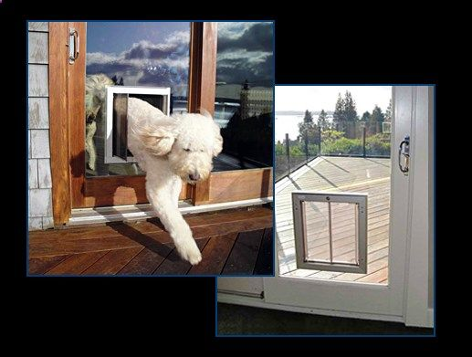 Plexidor dog doors and cat doors can be installed in glass using a plexidor dog doors and cat doors can be installed in glass using a glass conversion sliding patio planetlyrics Gallery