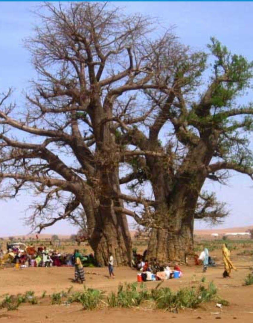 صور من بلادي السودان Sudan Community Google Nature Tree World