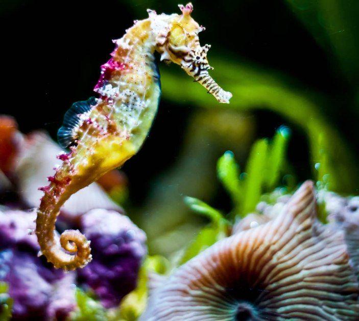 Ocean Life Rings