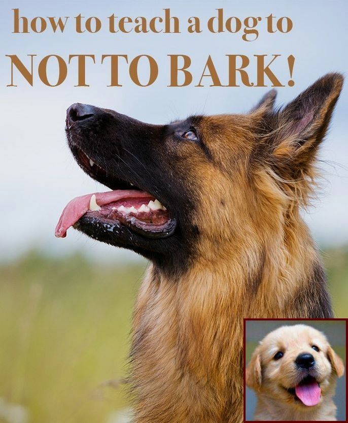 Dog Behavior School Near Me And Clicker Training Dogs To Stop