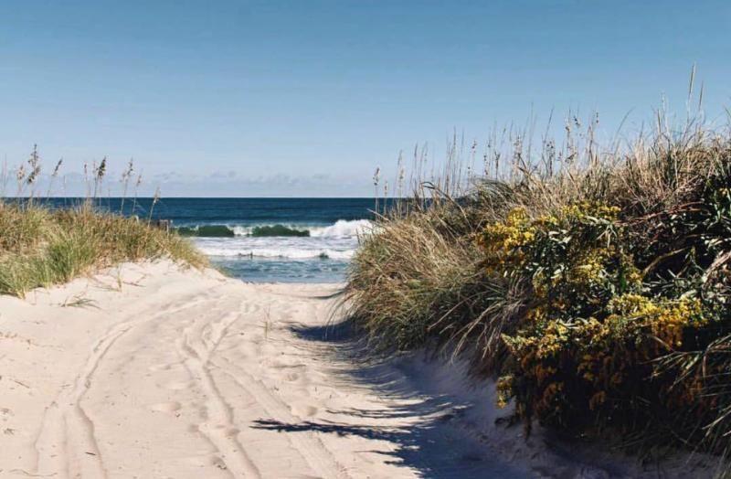 Explore False Cape State Park In Va Beach In 2020 State Parks