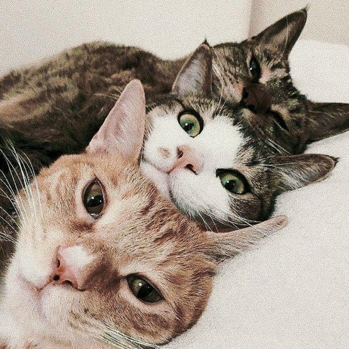 Pinterest sweetness Pet spaces, Fluffy cat, Cats