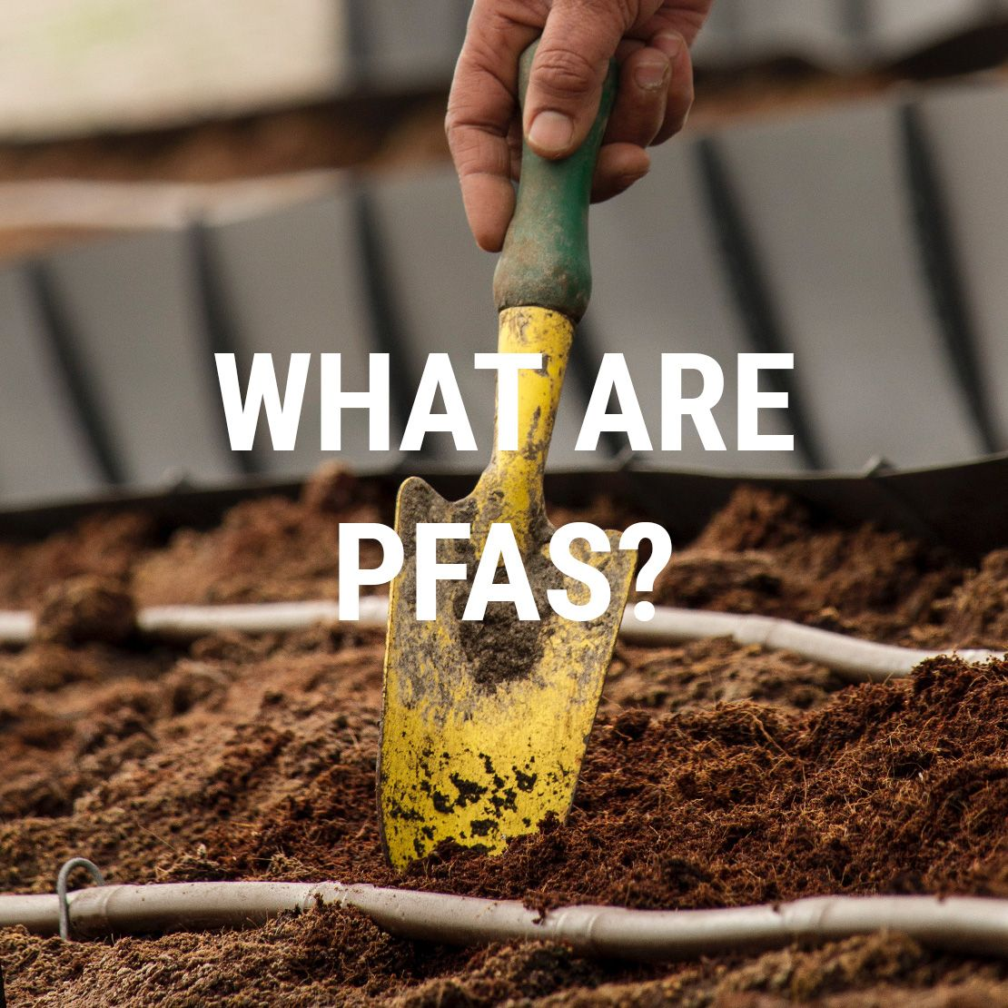 PFAS in the Food Industry Food industry, Food, Food safety