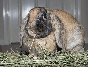 Rabbit hay a big hit for this cute little bun.