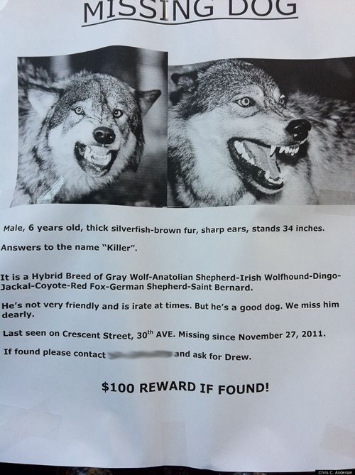 The 10 Most Awesome Lost Pet Flyers Losing A Dog Losing A Pet