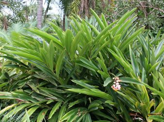 Plant Nursery And Landscaping Services