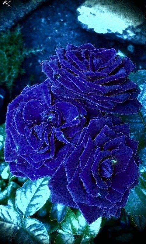 девайс красивый букет синих роз гиф существует множество других