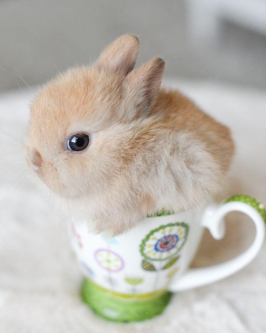 Baby Bunny Teacup [EXPLORE], 123/365 | Flickr