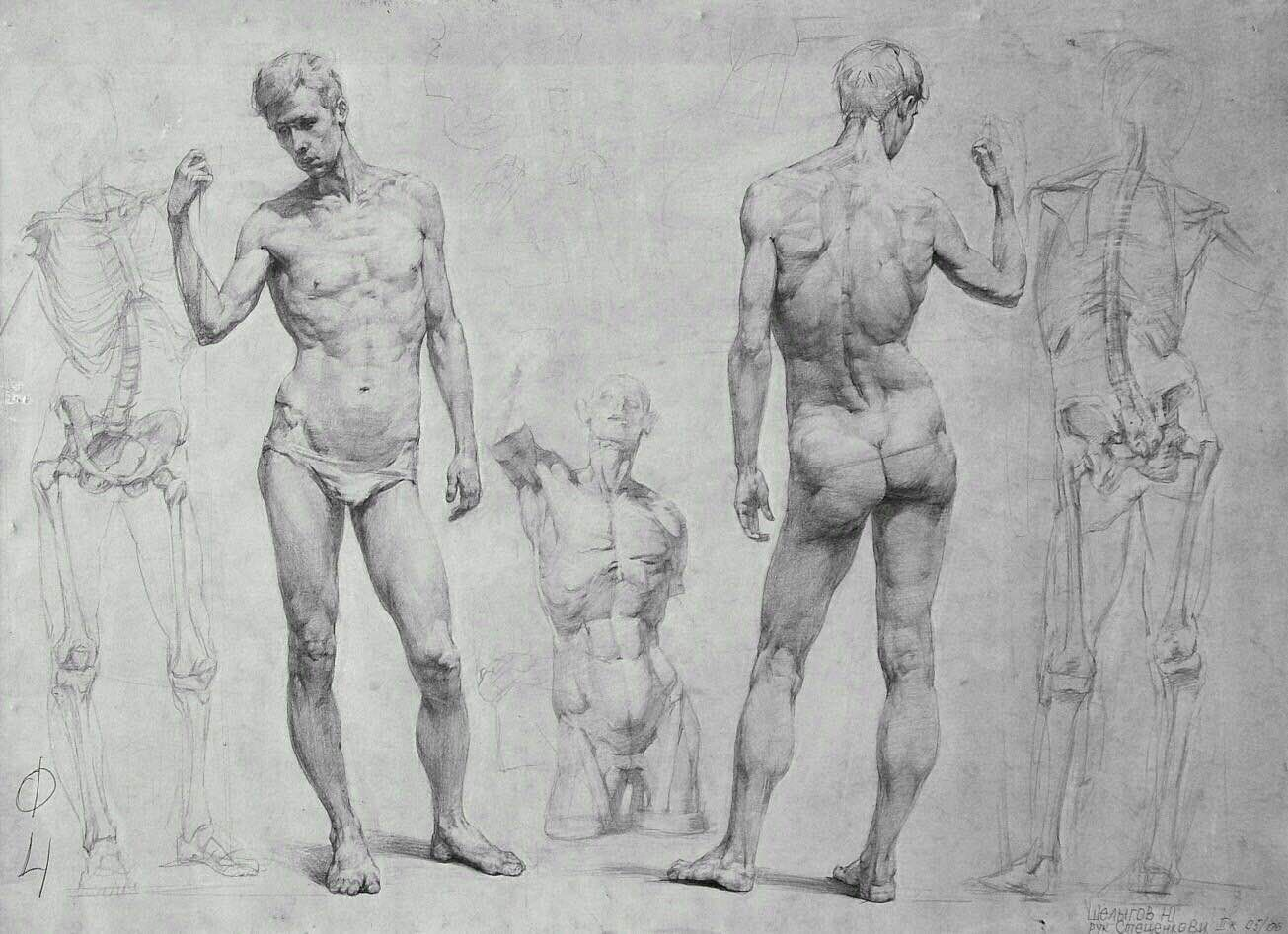 Pin By Vijay Benere On Figure Drawing Pinterest Anatomy Figure