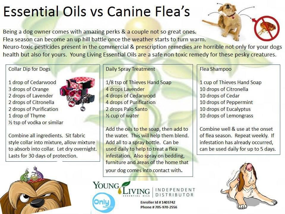 young living oils that control fleas essential oils pinterest. Black Bedroom Furniture Sets. Home Design Ideas