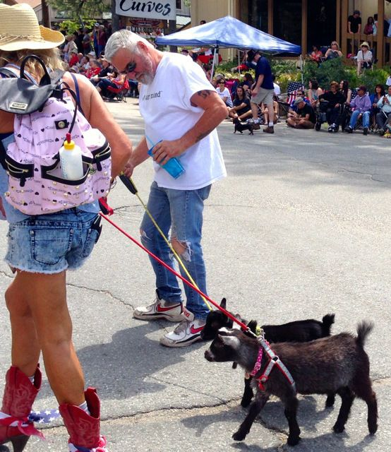 Hal Dahlstrom, Owner, Mountain Paws Pet Boutique, assisting in mini goat walking.