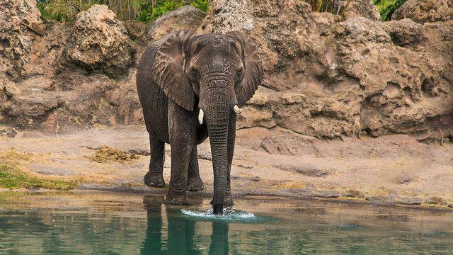 Disney's Animal Kingdom Kilimanjaro Safari