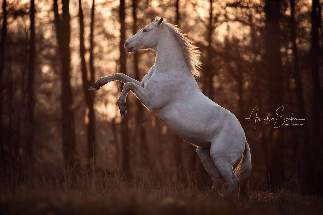 Dressurpferde Von Ksenia Auf Horse In 2020 Hubsche Pferde Pferde Fotografie