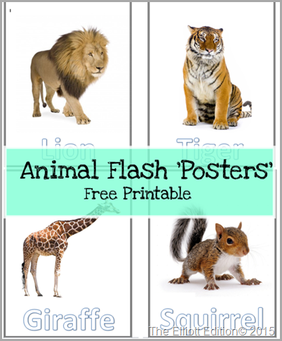 Animal Flash 'Posters' (With images) Animal flashcards