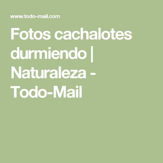 Fotos cachalotes durmiendo   Naturaleza - Todo-Mail