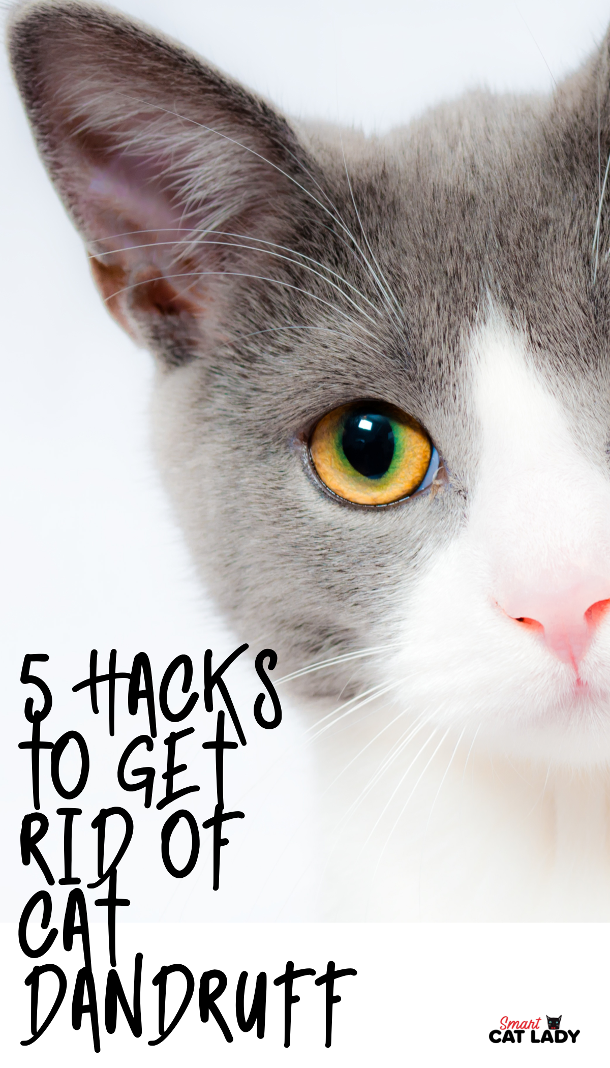 5 Hacks To Get Rid Of Cat Dandruff In 2020 Cat Dandruff Cat Shampoo Cats