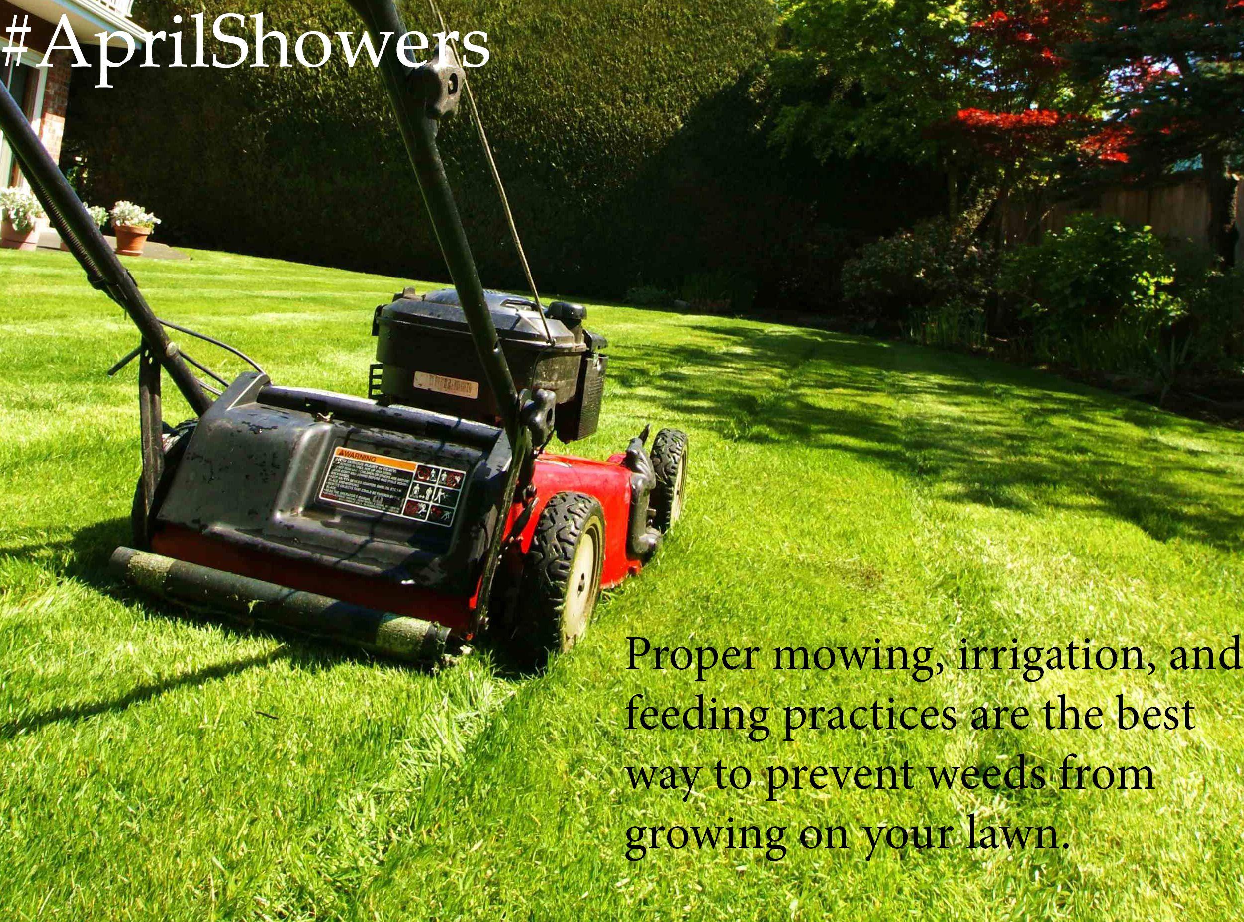 Aprilshowers tip4 mowing preventweeds green lawn
