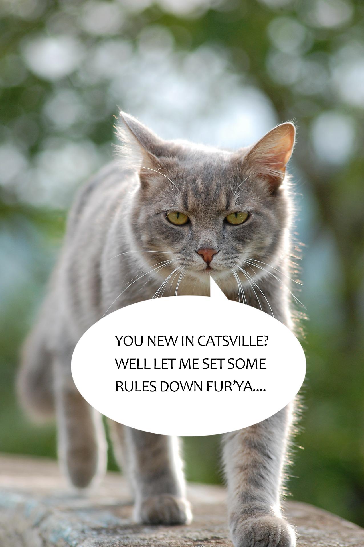 Memorable Cat Moments Memes Cbwp