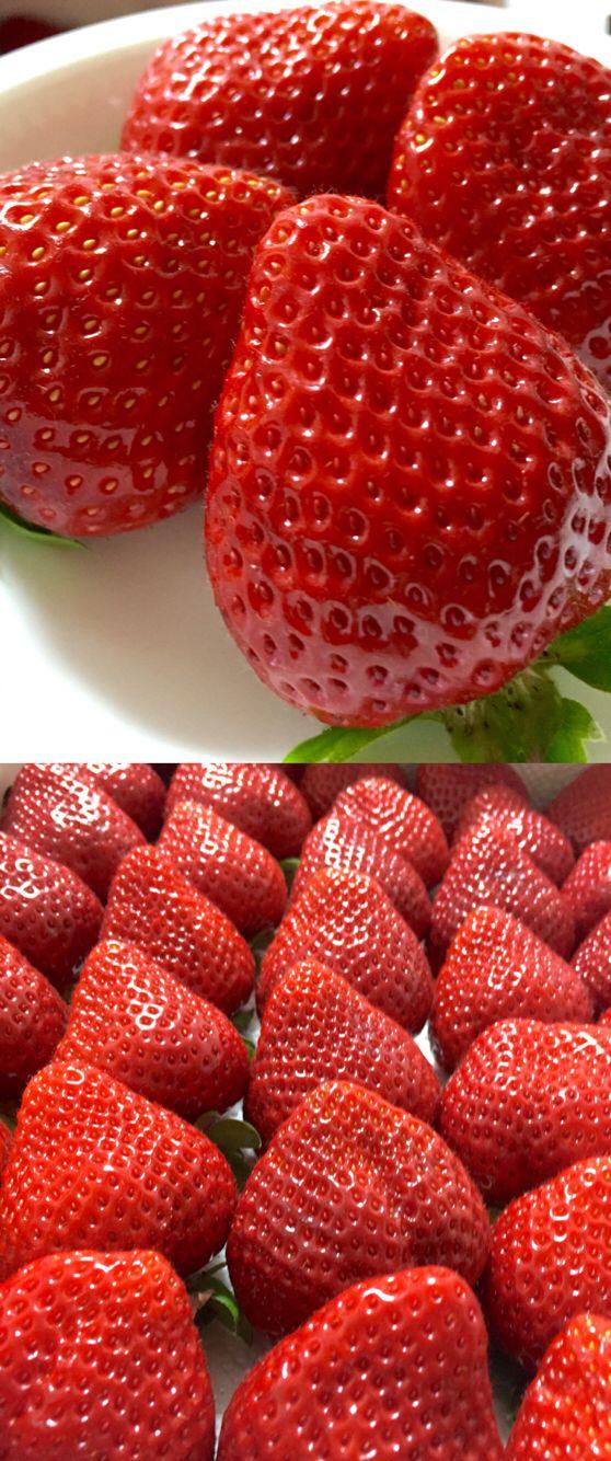 """Fukuoka of strawberry """"AMAOU"""" あまおう 苺大好きyummy!"""