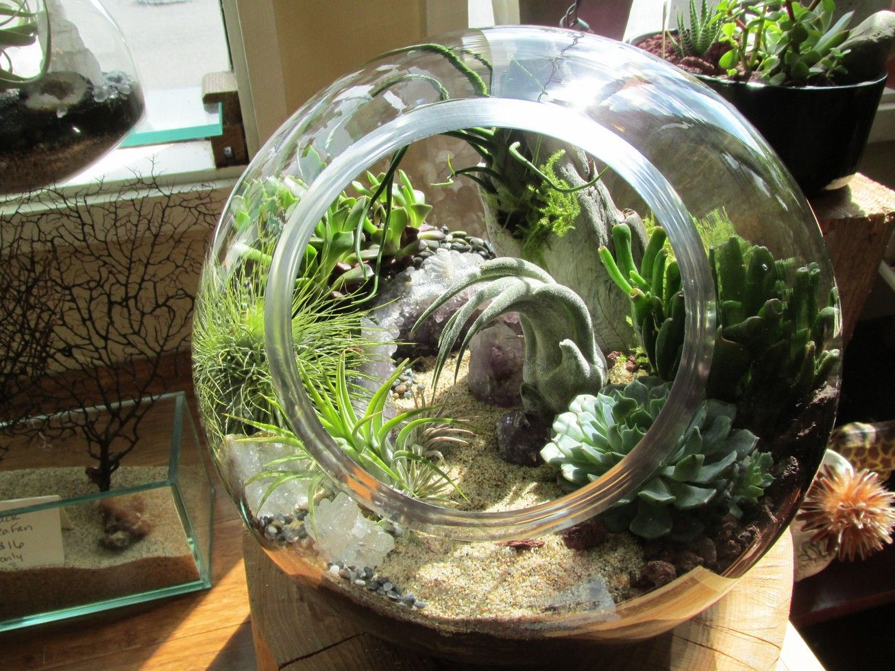 Astronaut from midnight blossom in seatle terrariums pinterest