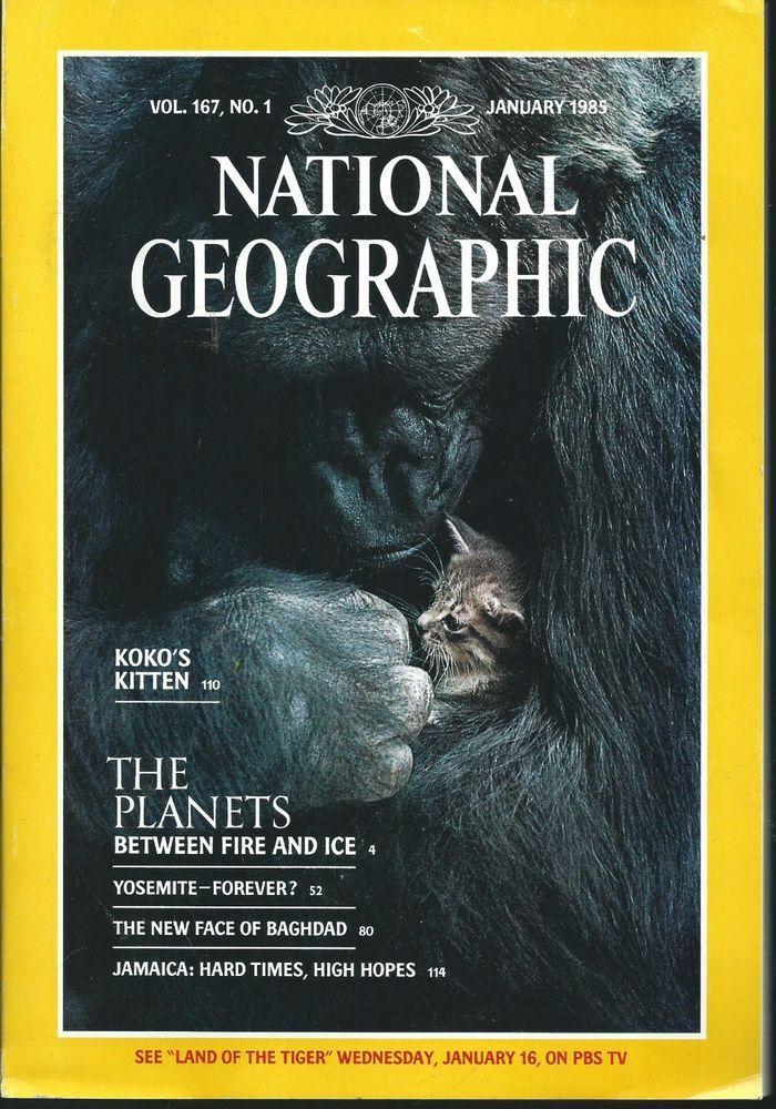 May 1985 National Geographic Magazine Koko The Gorilla And