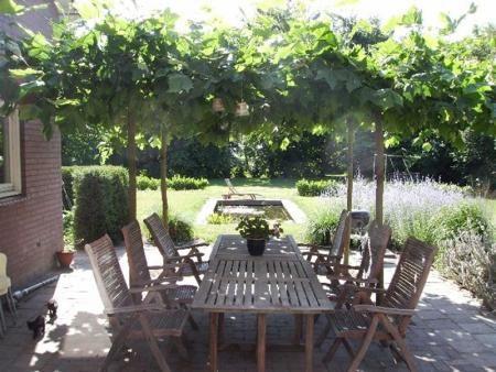 Dakplatanen terras google zoeken tuin pinterest gardens - Tuin en deco ...