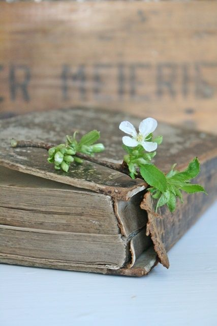 An old ragged book....love