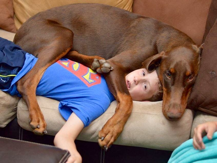 #Doberman. No concept of personal space. If he wants to sit there, he is going to try to sit there, no matter what. lol