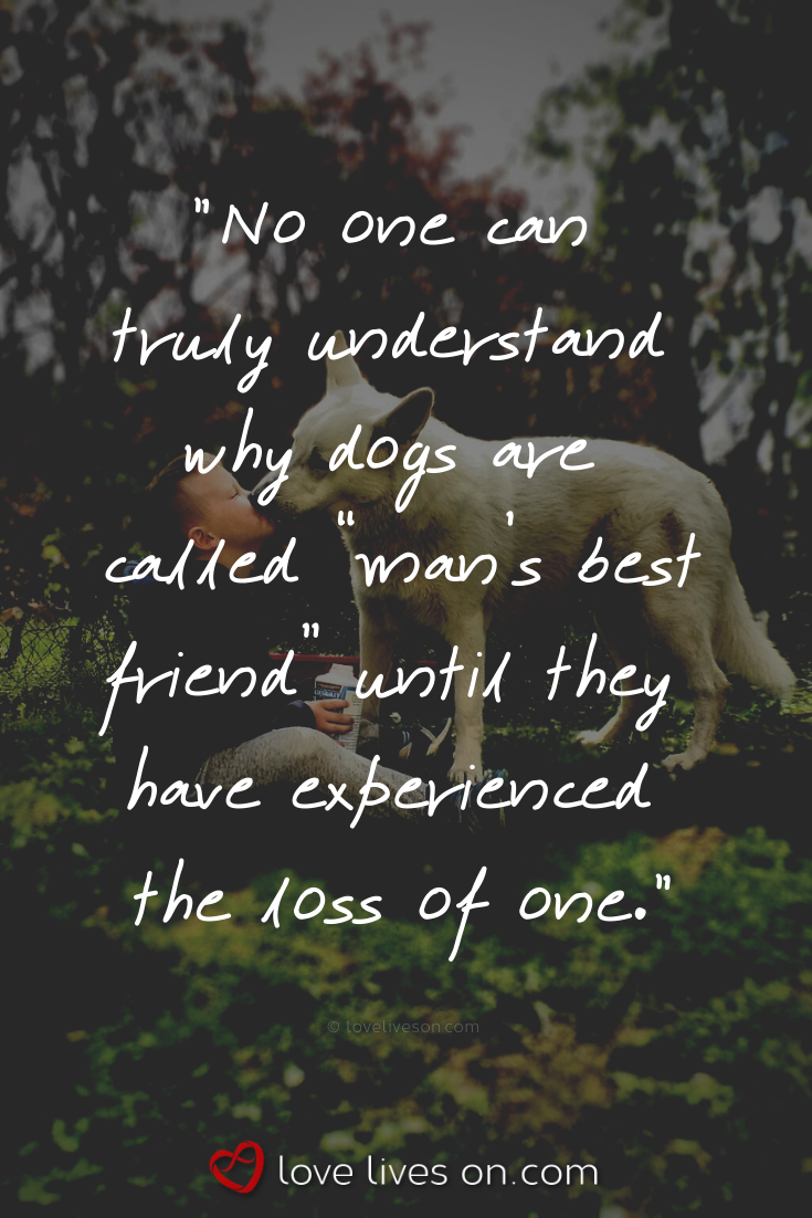 50 Beautiful Loss Of Pet Quotes Pet Quotes Dog Death Of A Pet Dog Quotes