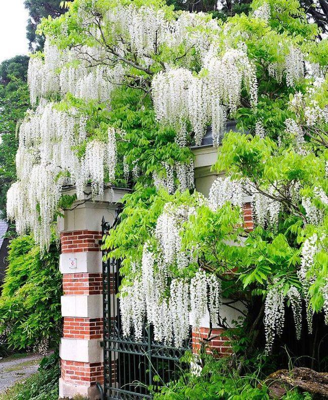 Цветущие деревья для сада фото и названия