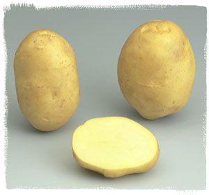 Variété Jaerla - Le plant français de pomme de terre