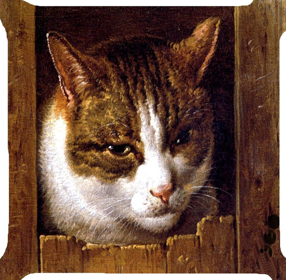Cat Kitten Wood Door Play Funny Kitty Pet Pillow Cushion Cover Handmade 2 Side Ebay Cat Art Cat Portraits Canvas Art Prints