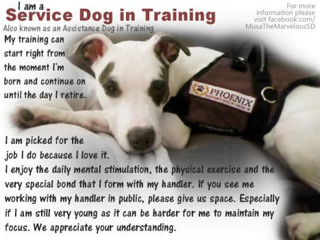 Image Result For I Love My Service Dog In Training With Images
