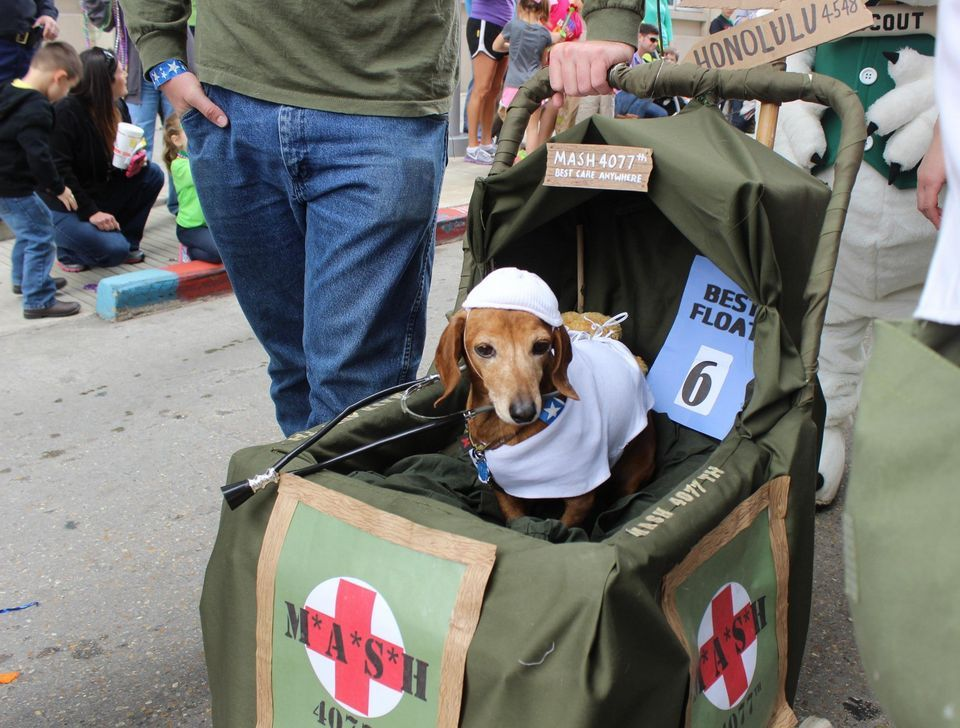Caaws dog parade fills downtown baton rouge with costumed